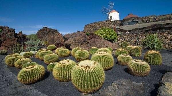 Kaktus Garten auf Lanzarote