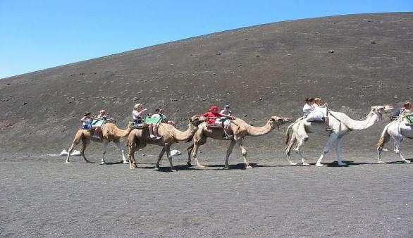 Kamelreiten auf Lanzarote